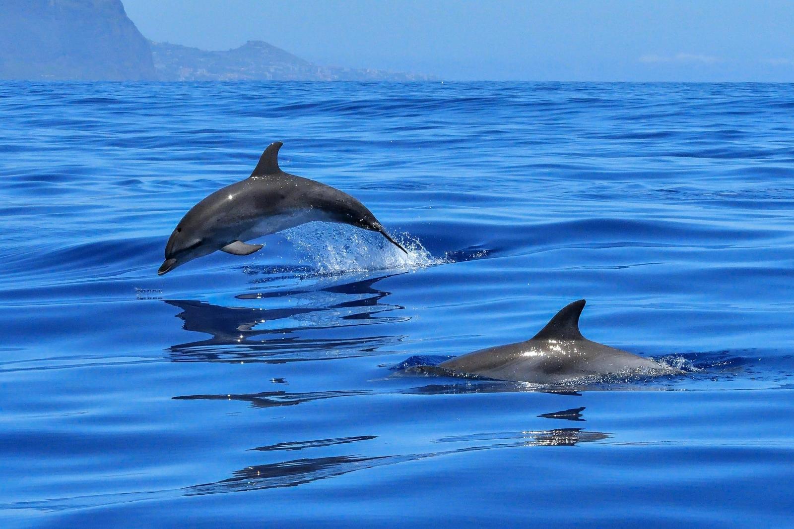 Delfines nadando libremente en su hábitat.